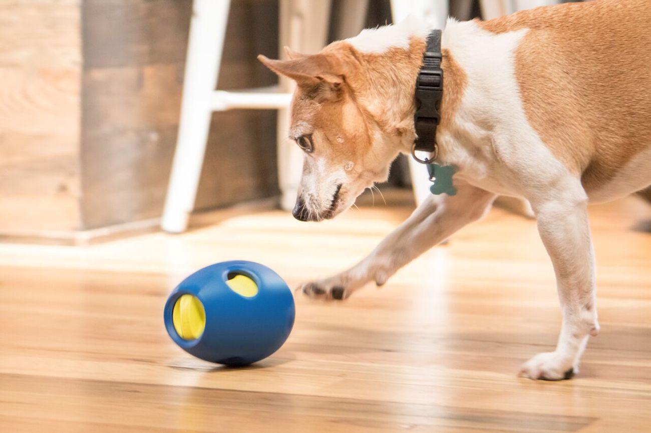 Tikr Snack Activity Dog Toy