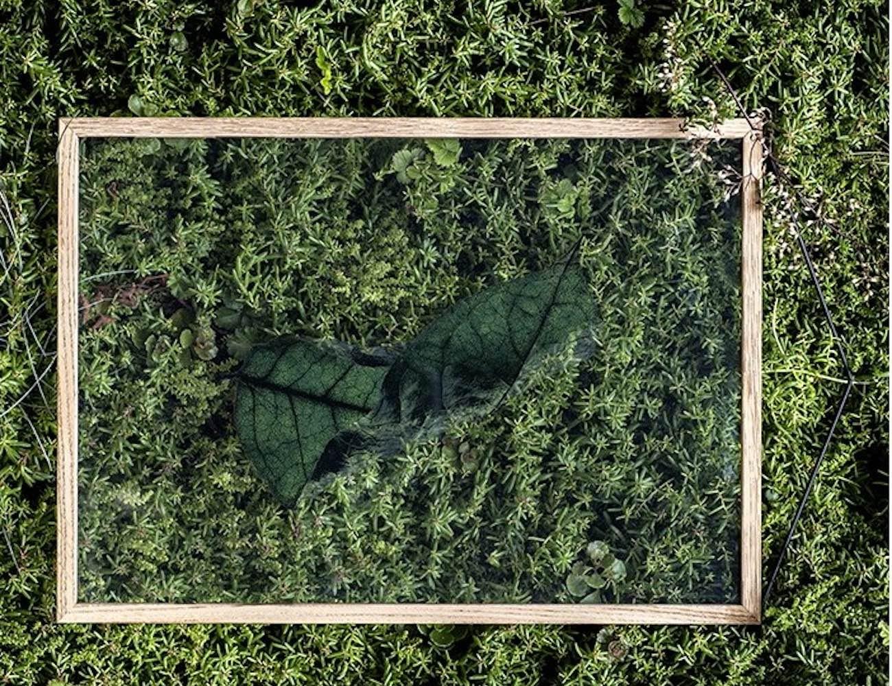 Moebe Floating Leaves Botanical Photography