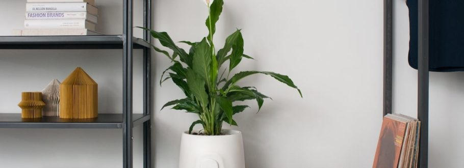 Improve the air quality in your home with NATEDE