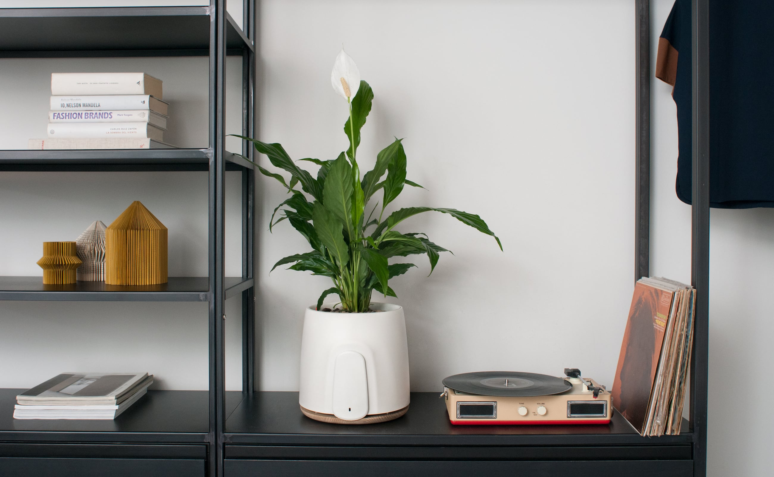 Natede Smart Natural Air Purifier eliminates bacteria and viruses in the air