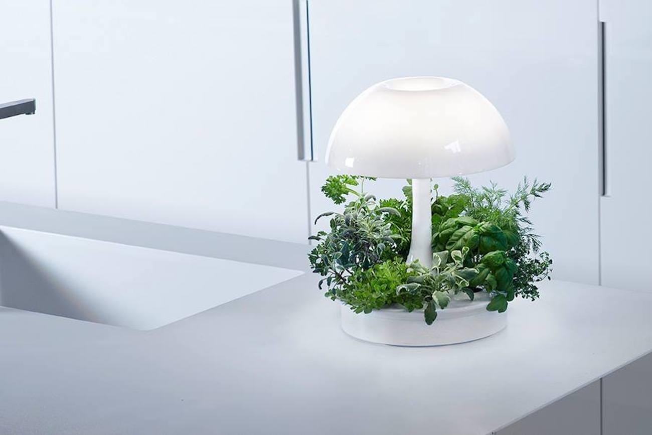 Sagegreenlife Ambienta Living Table Lamp