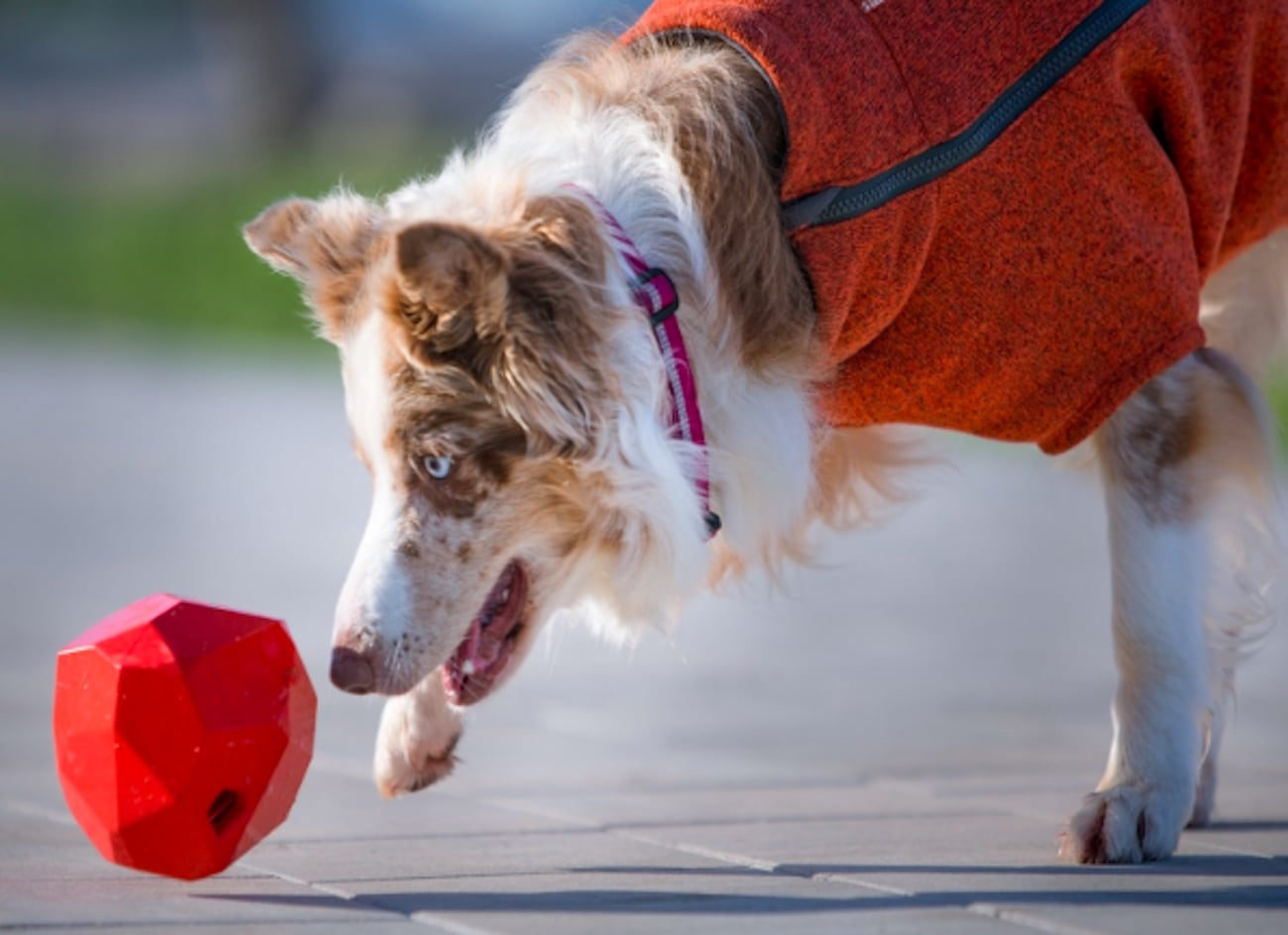 Ruffwear Gnawt-a-Rock Kibble Dispensing Dog Toy