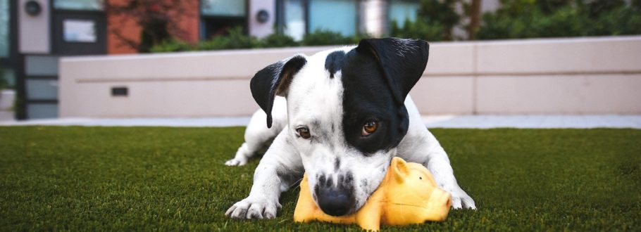 6 Modern dog toys to enrich your dog's life