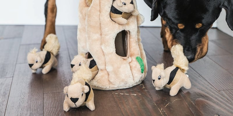 6 Modern dog toys to enrich your dogs life