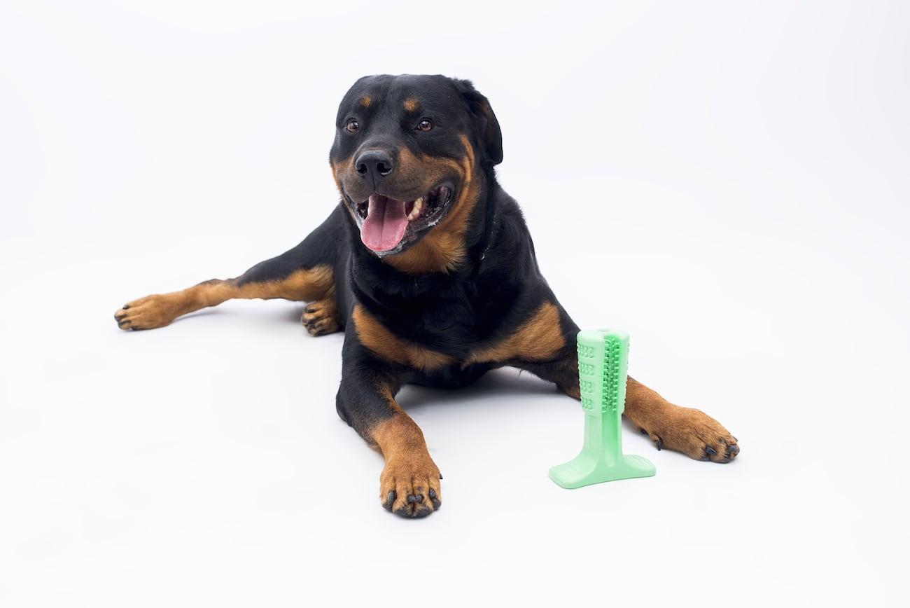 Bristly Dog Tooth Brushing Stick