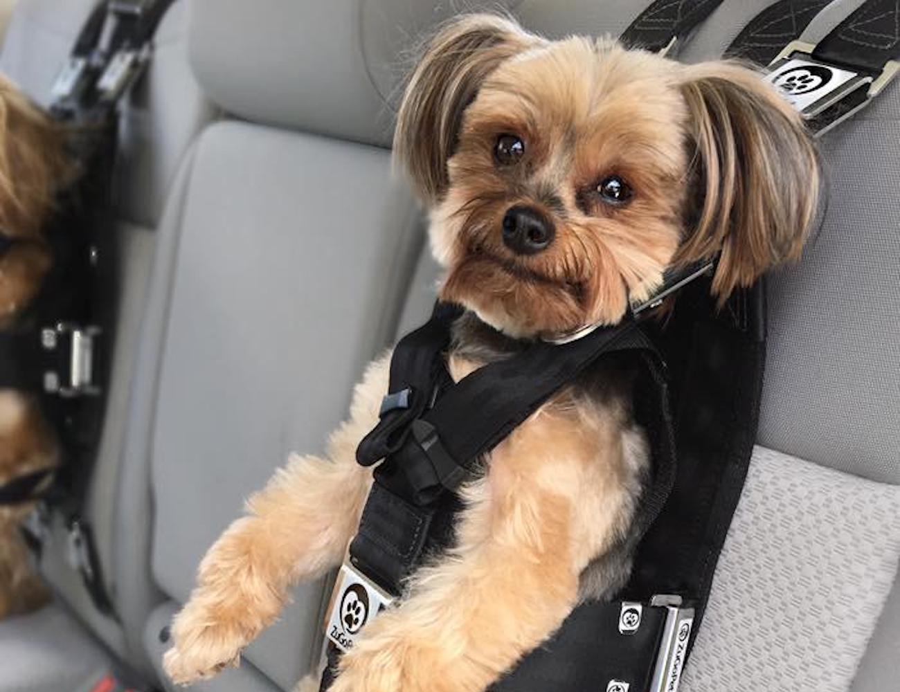 ZuGoPet Rocketeer Pack Multifunctional Dog Harness