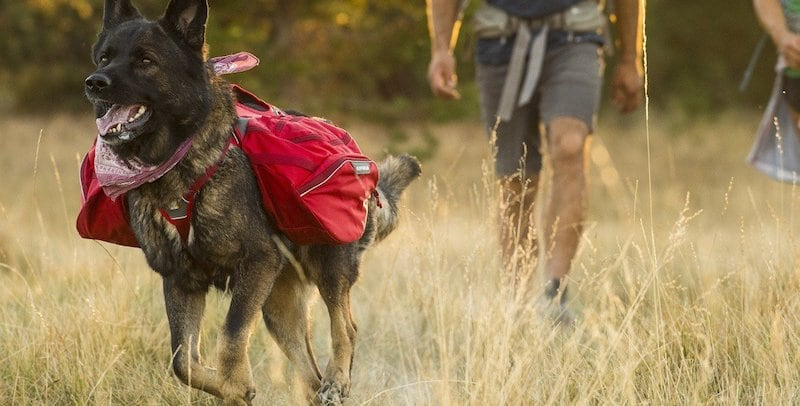 9 Dog accessories for the truly adventurous owners