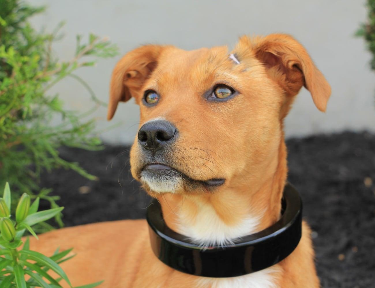 Chord Kind Smart Dog Collar