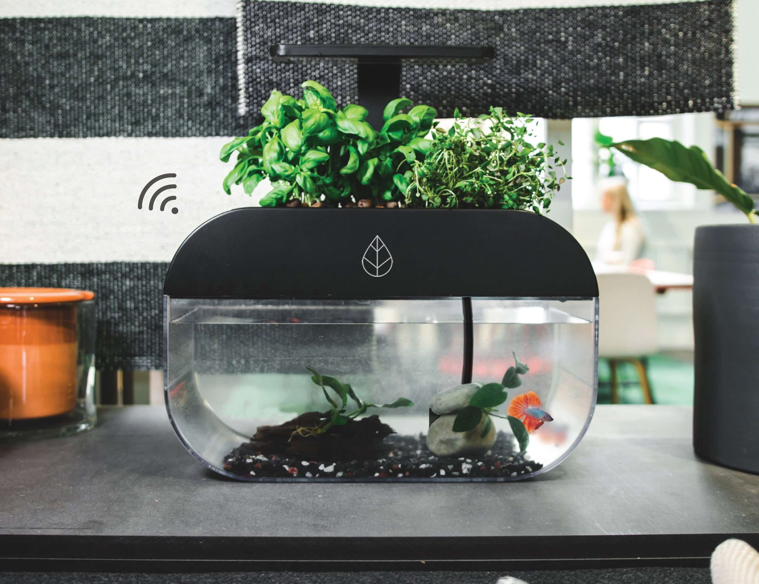 EcoGarden Smart Interactive Ecosystem