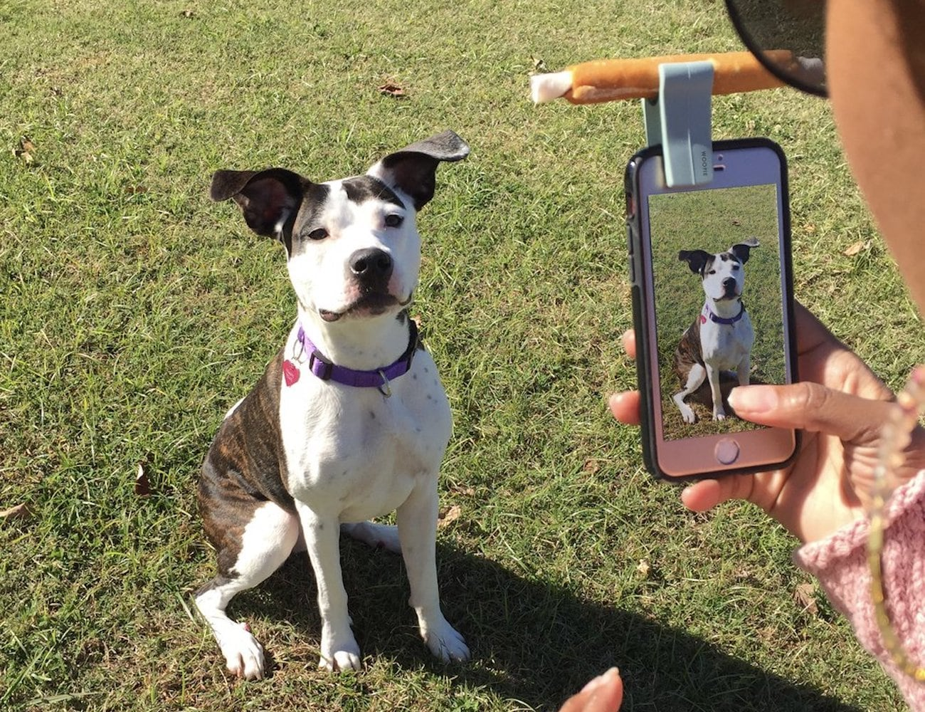 Model Citizen Pet Woofie Pet Selfie Tool