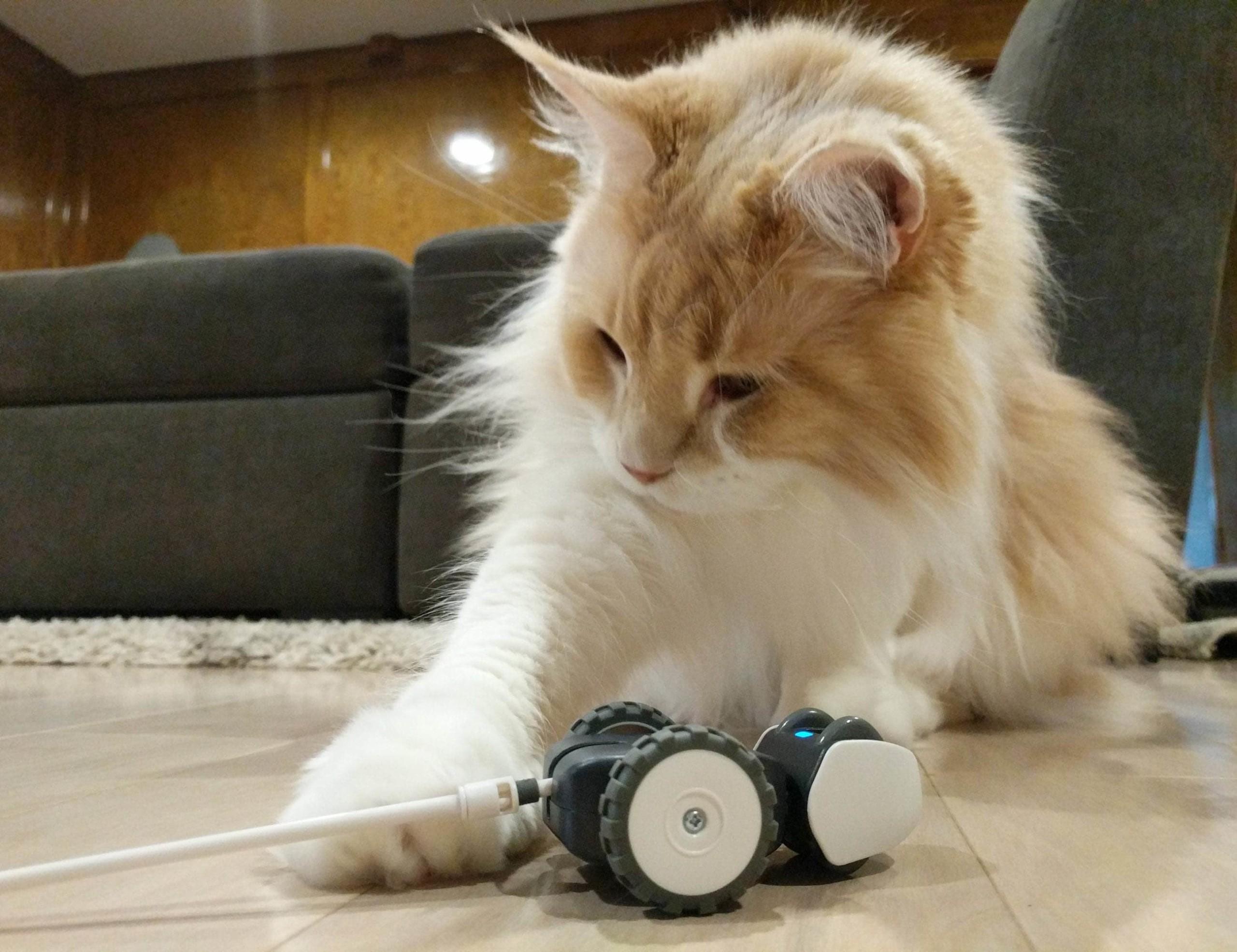 Petronics Mousr Robotic Cat Toy