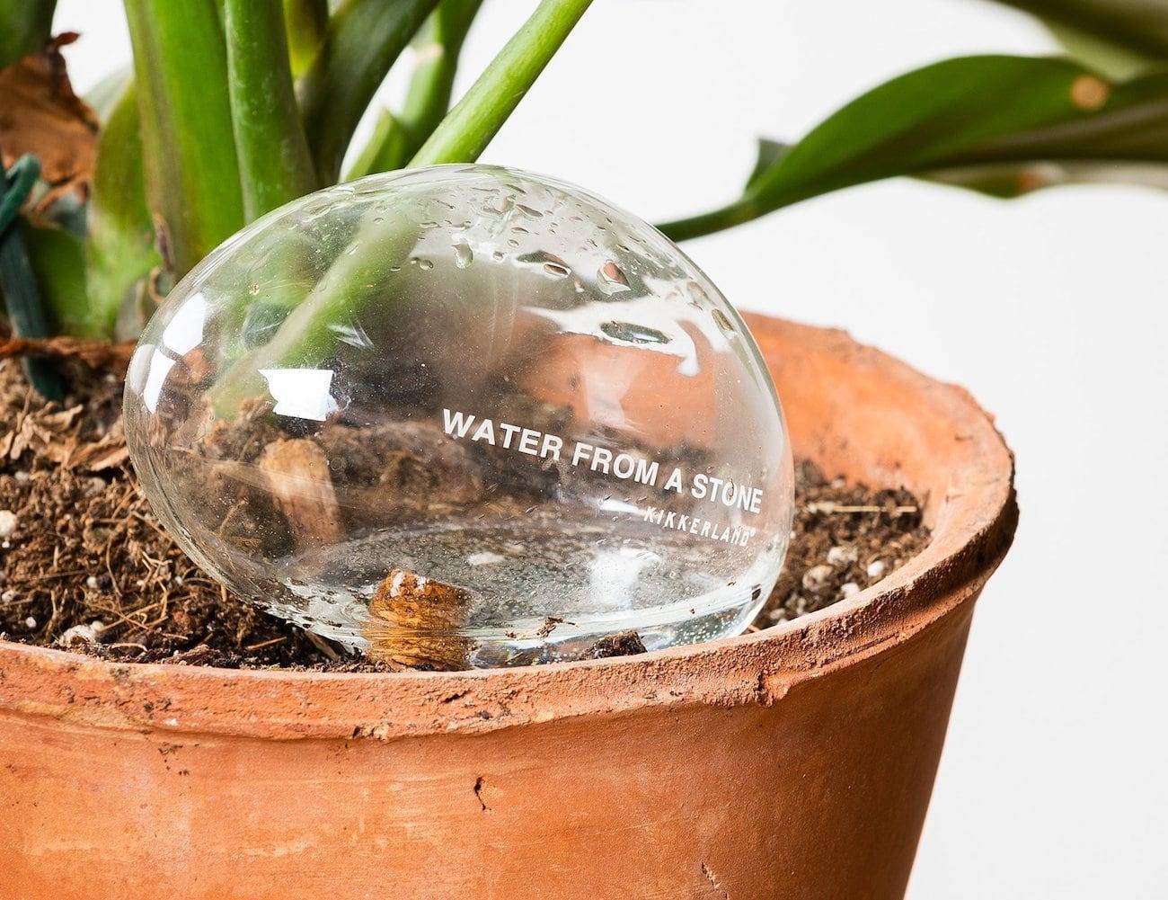 Kikkerland Automatic Self-Watering Plant Globes