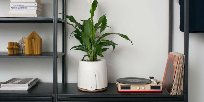 Smart Natural Air Purifier