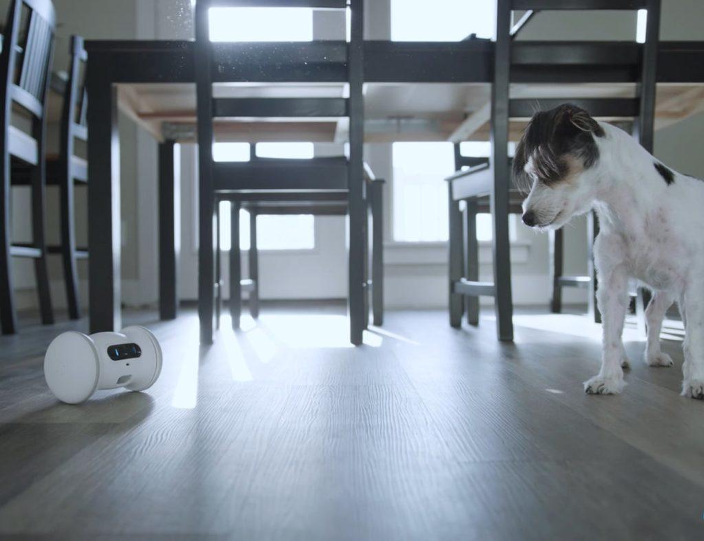 VARRAM+Pet+Fitness+Robot