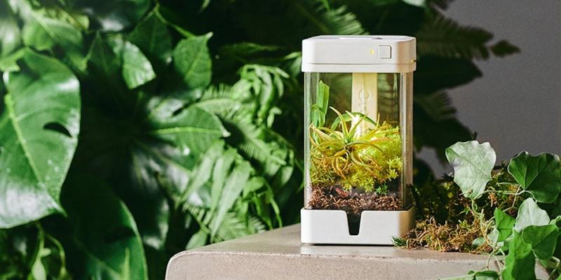 grow indoors 03