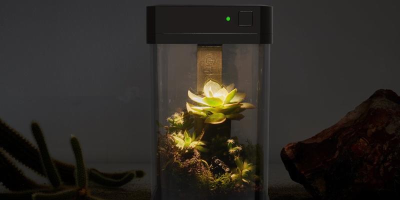 grow indoors 06