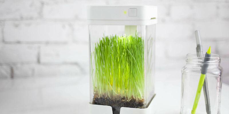 Smart Mini Ecosystem