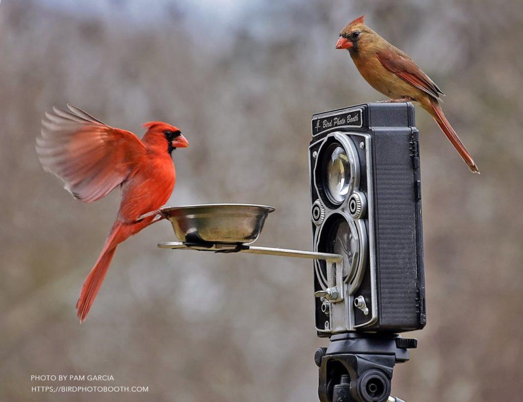 Bird+Photo+Booth+2.0+Camera+Bird+Feeder