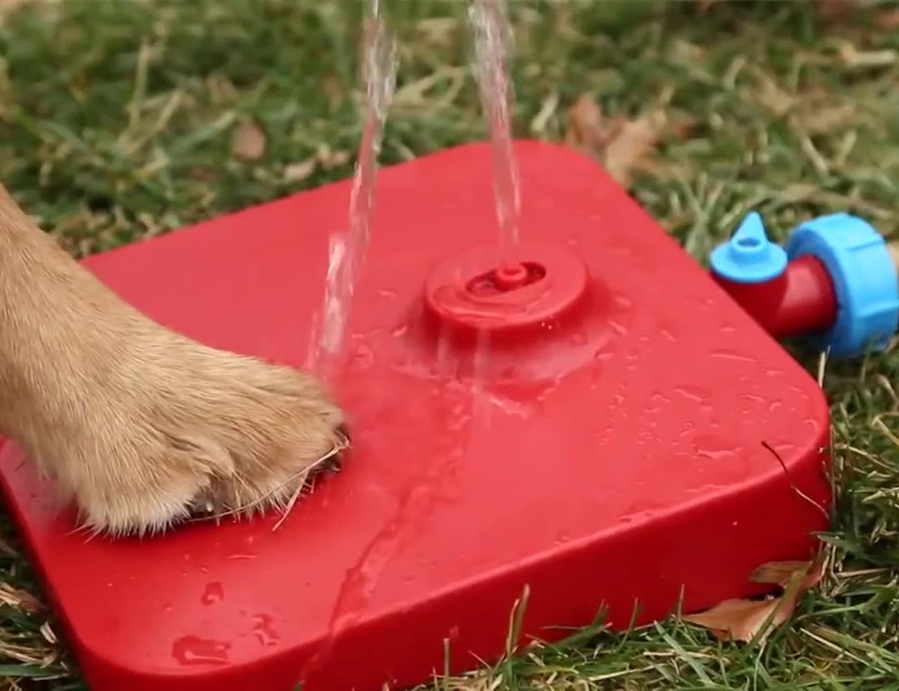 Pawcet Outdoor Dog Water Fountain