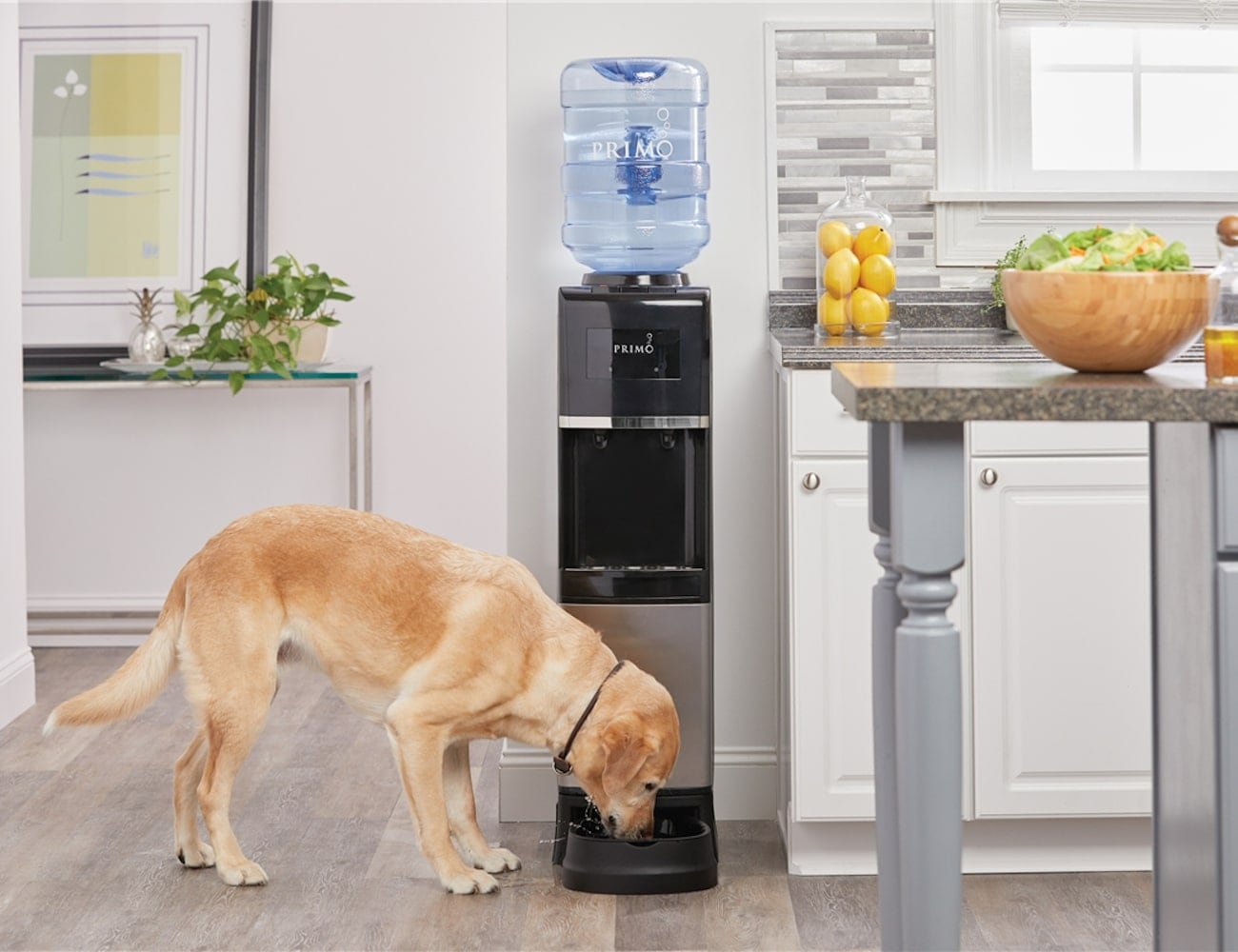Primo Pet Station Water Dispenser