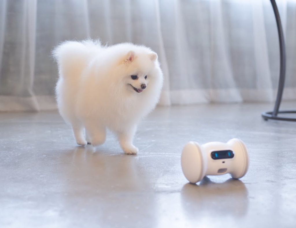 VARRAM+Pet+Fitness+Robot