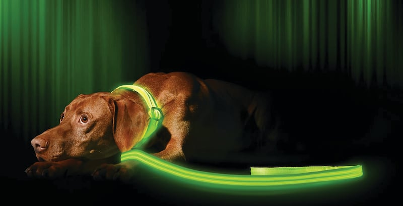 Illumiseen LED USB Rechargeable Dog Leash & Collar - 11 Dog accessories to spoil your pooch