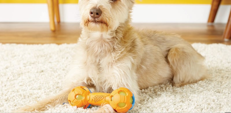 Nerf Dog Light Up Bash Barbell Dog Toy - 11 Dog accessories to spoil your pooch