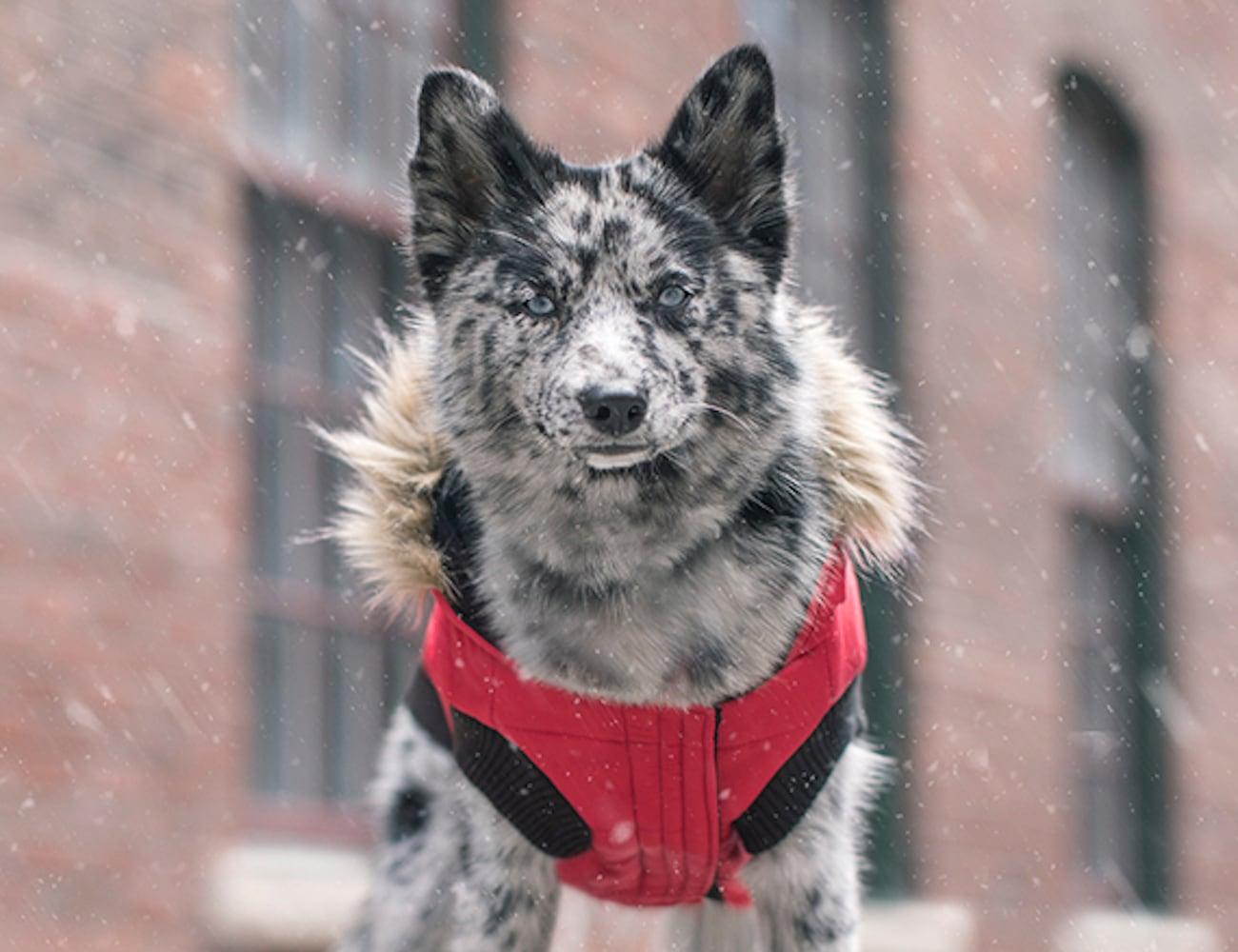 Canada Pooch North Pole Dog Parka