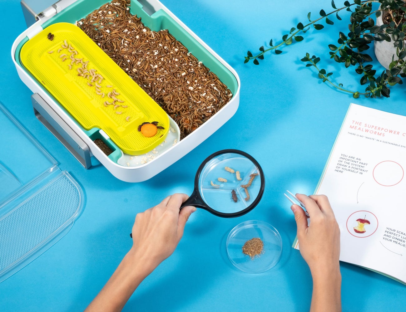 Hive Explorer STEM Insect Educational Kit