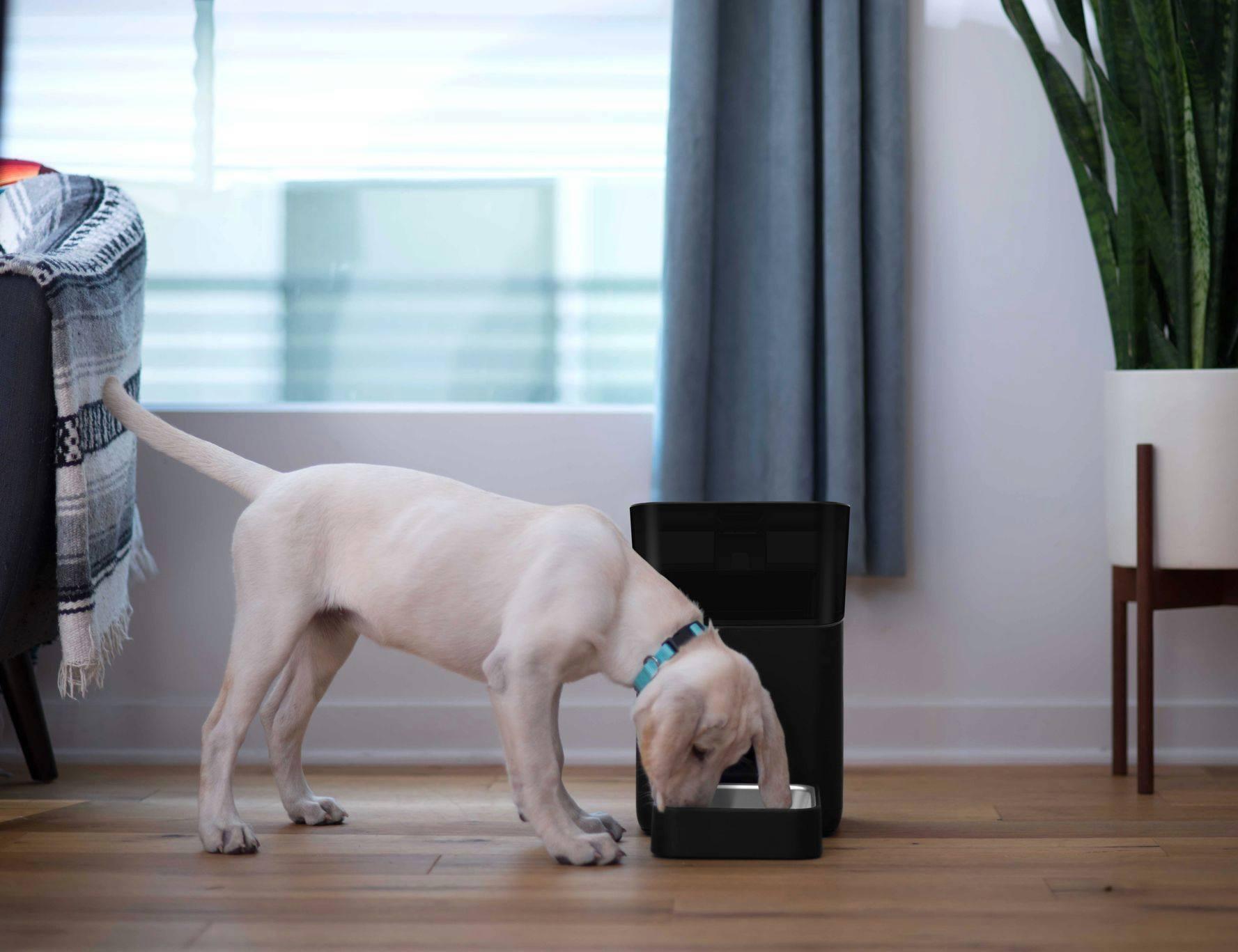 Petnet SmartFeeder 2nd Gen Wi-Fi Pet Feeder