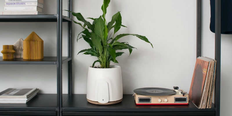 NATEDE Smart Natural Air Purifier