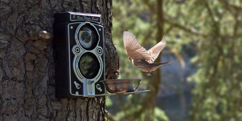 Bird Photo Booth 2.0 Camera Bird Feeder - Smart photography gear that every snapper should see