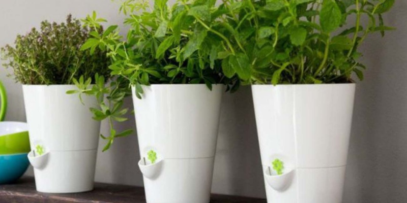 Smart Planter for Kitchen Herbs - Holiday gift guide – Gift ideas under $50