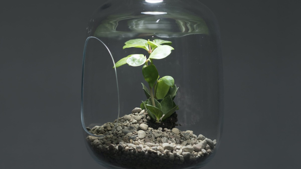 Milo Baby Plant Glass Lampshade