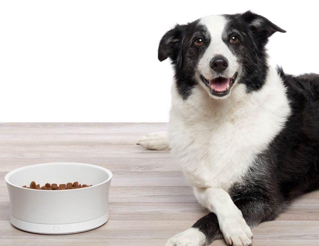 Obe+ProBowl+Smart+Dog+Bowl