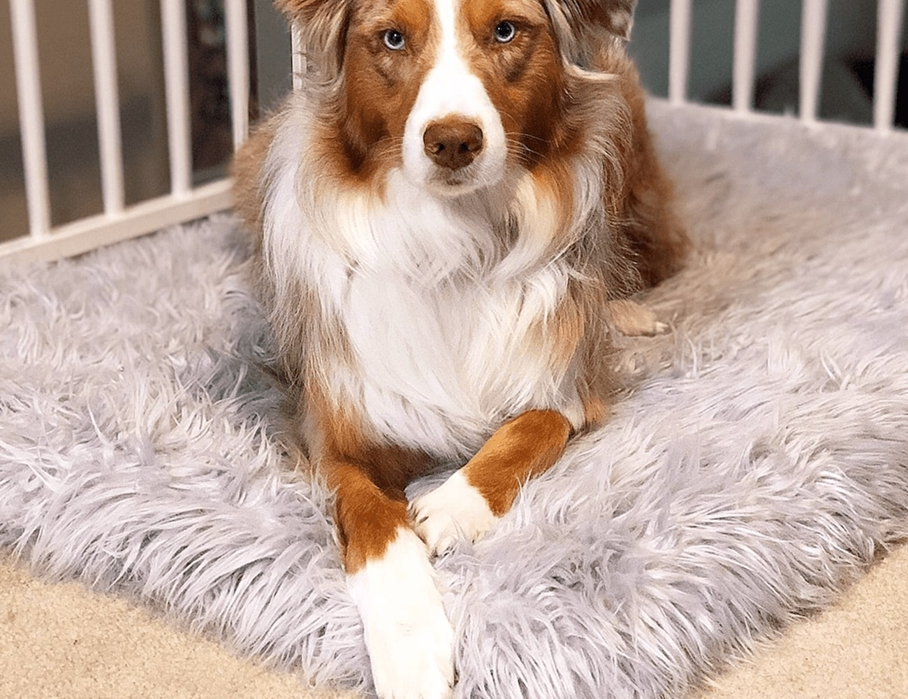 PupRug Faux Fur Orthopedic Dog Bed » Gadget Flow
