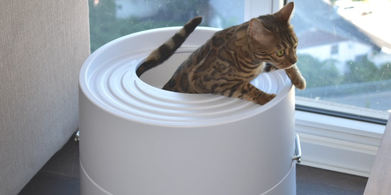 cat owner - Cat owner? You need to see the Boxscoop 2.0 litter box