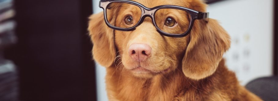 8 Pet gadgets that will make your pet even happier