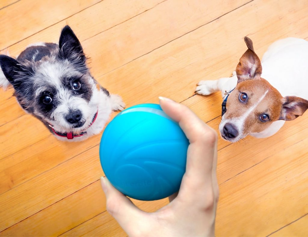 Cheerble+Wicked+Ball+Smart+Automatic+Pet+Toy+is+a+companion+for+your+pet