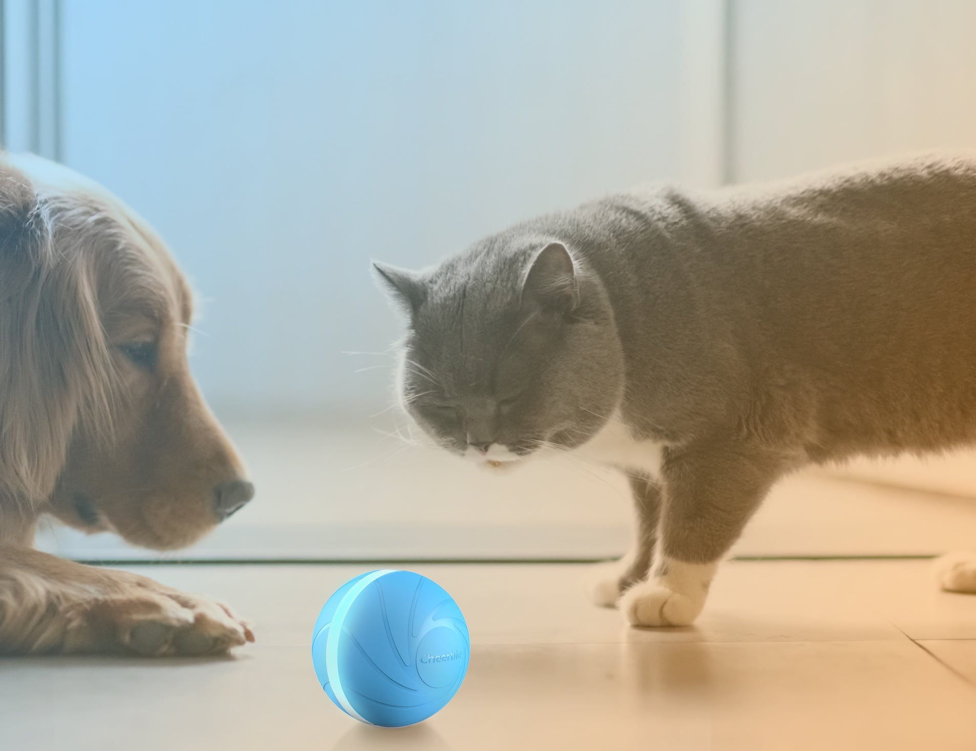 Cheerble Wicked Ball is a smart automatic pet toy for dogs