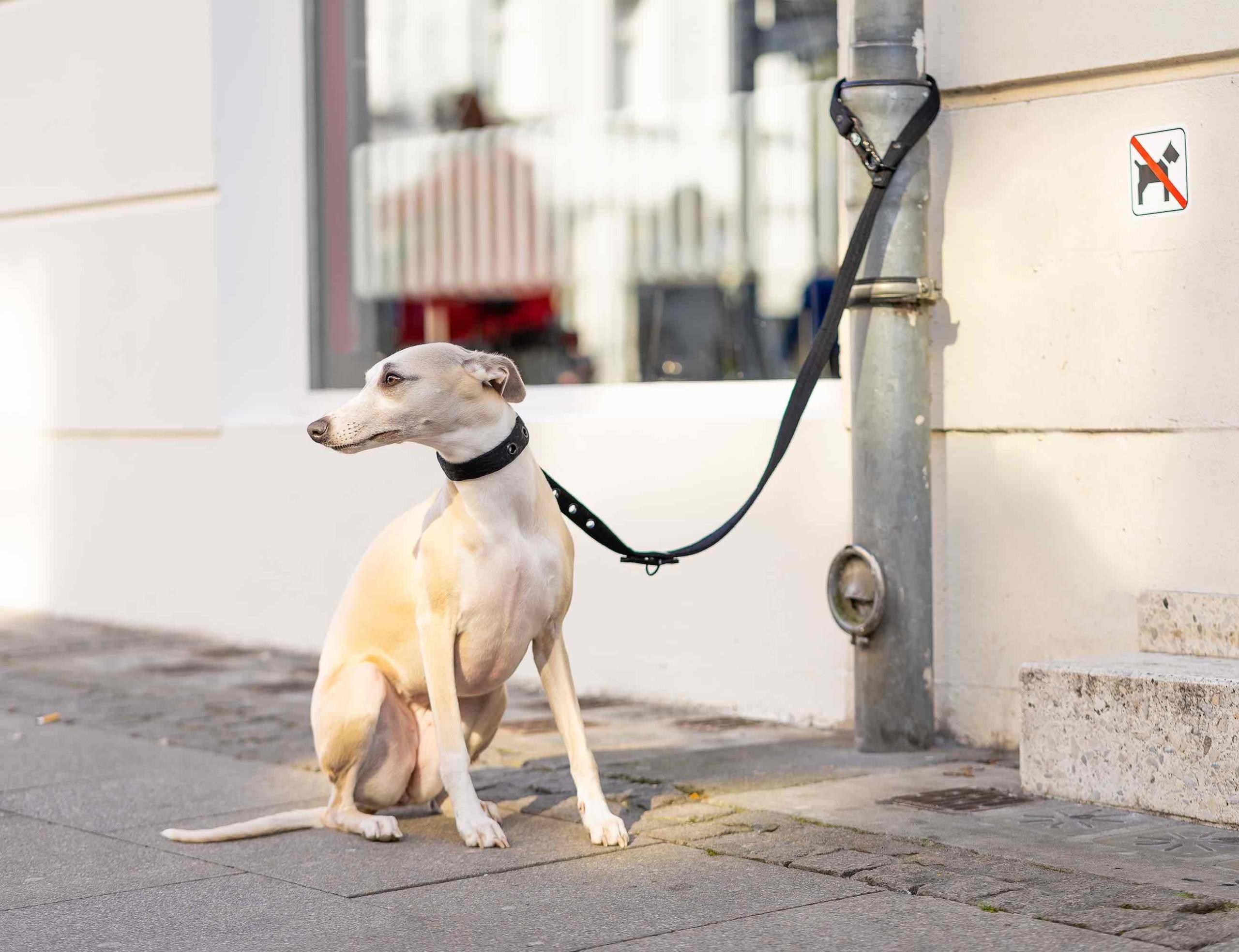 LOCK DOG Theft-proof Locking Dog Leash features two locks