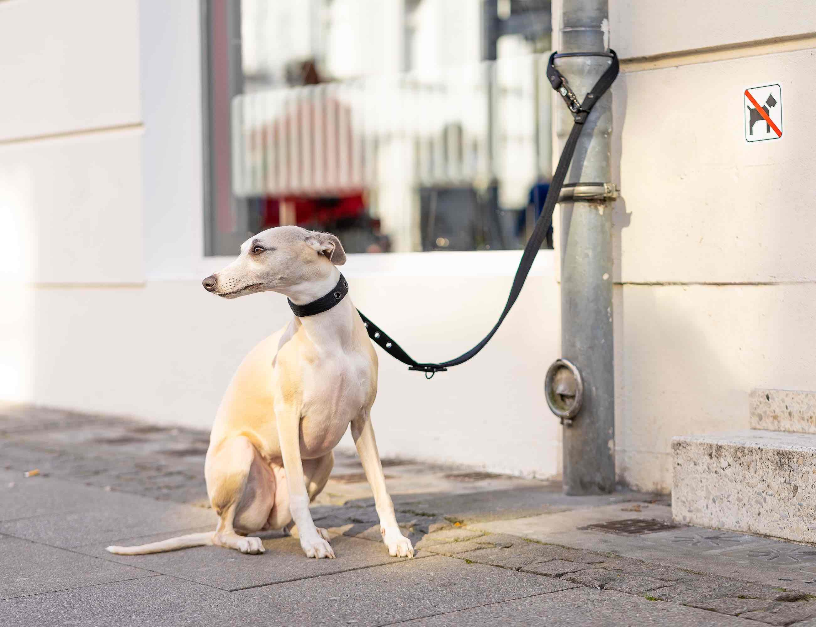 LOCK DOG Theft-proof Locking Dog Leash features two locks