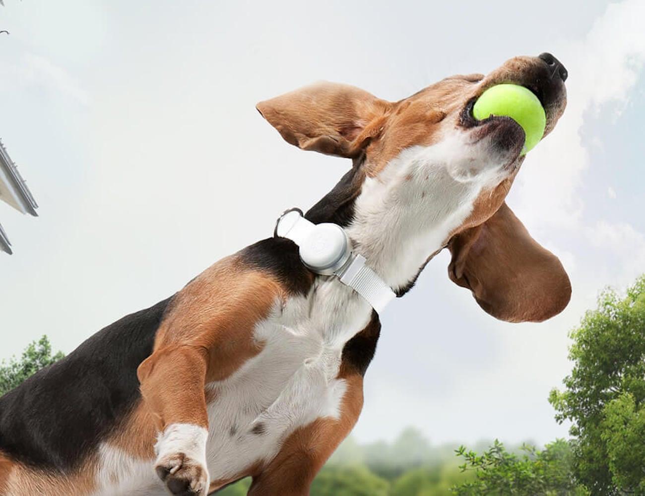 Mishiko Dog GPS Tracker monitors your pet's activity and fitness