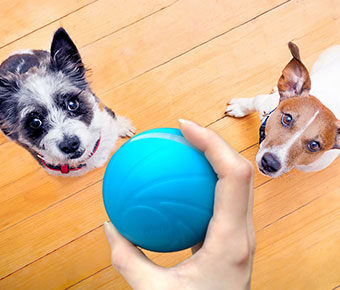Wicked+Ball+Smart+Automatic+Pet+Toy+keeps+your+pet+entertained+while+you%E2%80%99re+out