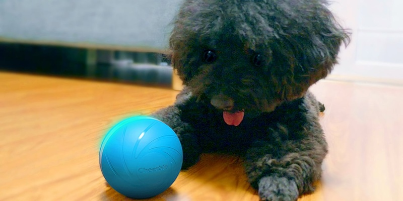 furry friend - The Cheerble smart toy will keep your pet active all day