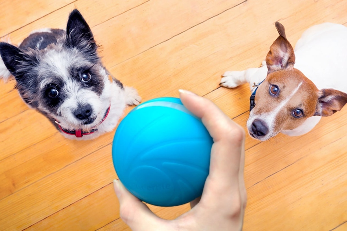 The Cheerble smart toy will keep your pet active all day