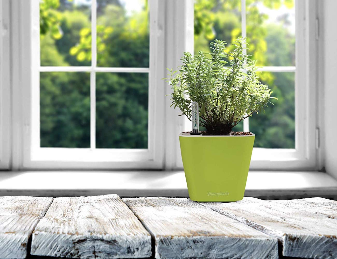 Aquaphoric Small Self-Watering Planter by Window Garden gives life to your home