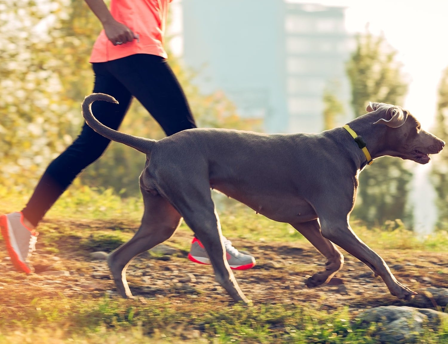 Fit Bark 2 Advanced Dog Activity Tracker is like a Fitbit for your dog