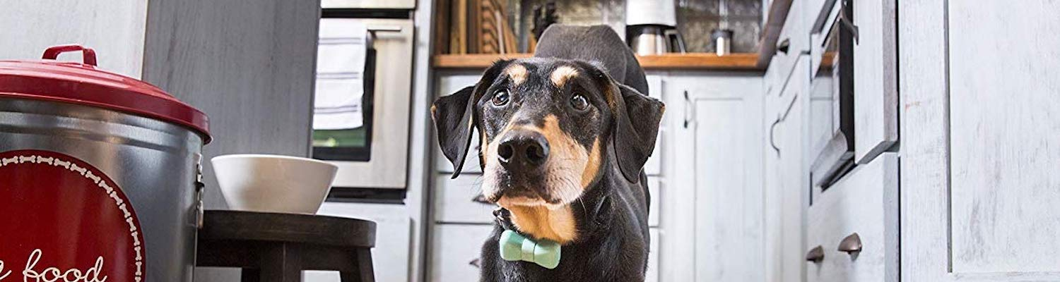 7 Pet gadgets to make life better for you and your dog