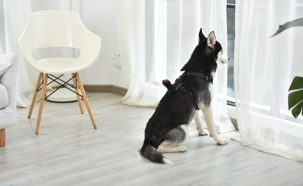 PetNow+Wearable+HD+Dog+Camera+gives+a+new+perspective+to+your+adventures